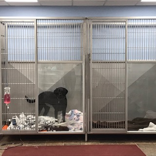 KENNEL AREA 2
